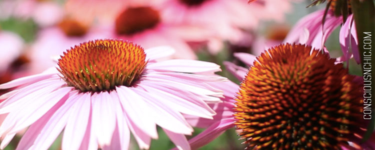 5_easy_steps_to_improve_your_health_sustainably-flowers